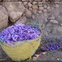 36 SAFRAN -  Fleurs Imgoun (Large) (Small)